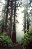 gröna röda trän royaltyfri foto