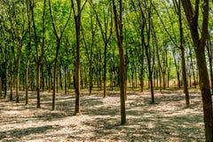 gröna radtrees Arkivfoto