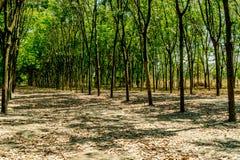 gröna radtrees Arkivbilder