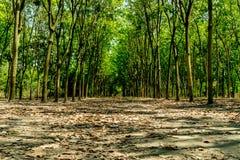 gröna radtrees Arkivbild