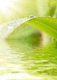 gröna raindrops för gräs Royaltyfri Bild