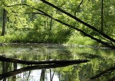 gröna reflexioner Arkivbild