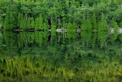 gröna reflexioner för acadia Arkivfoto