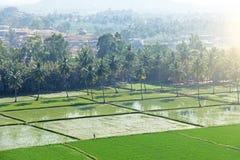 Gröna risfält eller terrasser i byn av Hampi Palmträd sol, risfält, stora stenar i Hampi Tropiskt exotiskt arkivfoto