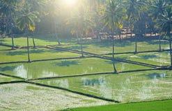 Gröna risfält eller terrasser i byn av Hampi Palmträd sol, risfält, stora stenar Tropiskt exotiskt landskap royaltyfri fotografi