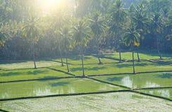 Gröna risfält eller terrasser i byn av Hampi Palmträd sol, risfält, stora stenar Tropiskt exotiskt landskap arkivbilder