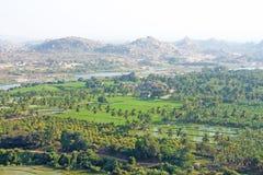 Gröna risfält, gömma i handflatan och floden Tungabhadra i byn av Hampi Palmträd solen, risfält Tropiskt exotiskt arkivfoton