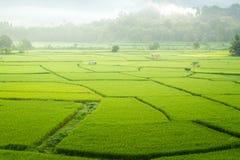 Gröna risfält i bygden av Thailand Arkivfoton