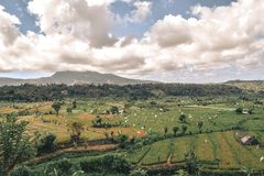 Gröna risfält med flaggafågelskrämmor med ett berg i en bakgrund i Bali royaltyfria foton
