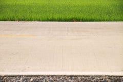 Gröna risfält med vattendroppar på vägen Royaltyfria Bilder