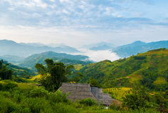 Gröna risfältterrasser i solen arkivfoto