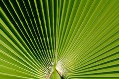 Gröna saftiga sidor i en sommar abstrakt bakgrund Royaltyfria Foton
