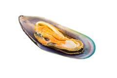 Gröna Shell Mussel Royaltyfria Foton