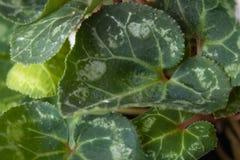 Gröna sidor av blommor stänger sig upp royaltyfria bilder