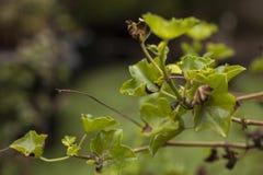 Gröna sidor - en trädgård i London royaltyfria bilder