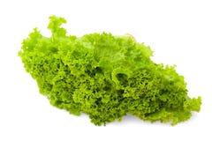 Gröna sidor för sallad för isberggrönsallat Arkivfoto