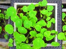 Gröna sidor i en vit ram arkivbilder