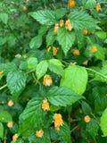 Gröna sidor och liten gul blommabakgrund fotografering för bildbyråer
