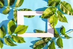 Gröna sidor och pappers- ram på blå pastellfärgad bakgrund i solljus Sommarkort, affisch, banerdesign fotografering för bildbyråer