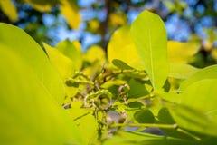 Gröna sidor på filialerna av träd med suddig bladbakgrund arkivbild