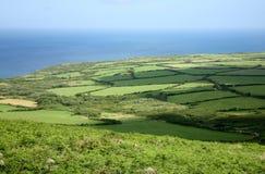 gröna skuggor för fält Arkivfoto