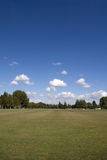 gröna skytrees för blågräs Arkivfoton