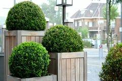 gröna spheres Royaltyfri Bild