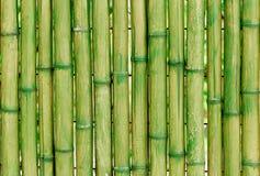 Gröna stammar av bambu royaltyfria foton