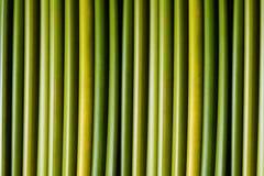 gröna stems Arkivbild