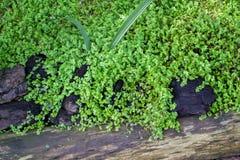 gröna stenar för gräs Royaltyfri Fotografi