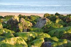 Gröna stenar på stranden av Zeeland royaltyfria foton