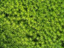 gröna stjärnor Royaltyfria Bilder