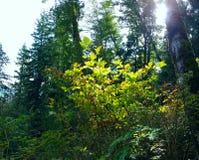 gröna strålar Fotografering för Bildbyråer