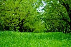 Gröna tamarineträd och grönt högväxt gräsfält Arkivfoto