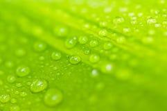 Gröna tjänstledigheter Royaltyfri Fotografi