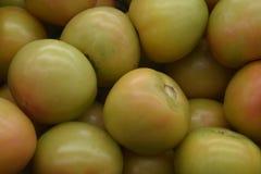 Gröna tomater är nya En bakgrund från grönsaker Arkivbilder