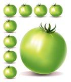 gröna tomater Arkivfoto