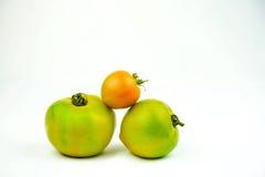 Gröna tomater arbeta i trädgården nytt som framläggas på en vanlig vit bakgrund Arkivbild
