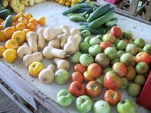Gröna tomater och squash Arkivfoton