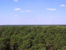 Gröna träd i en bästa sikt för härlig ändlös skog av horisonten royaltyfri foto