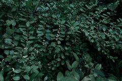 Gröna träd och bladgrönska Royaltyfria Bilder
