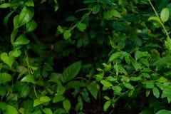 Gröna träd och bladgrönska Royaltyfri Bild