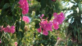 Gröna träd och blommor som är rosa mot blå himmel och skinande soldjungel Sikt i tropisk skogblommabakgrund materiel lager videofilmer