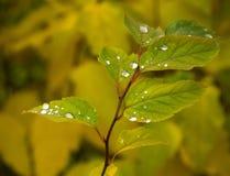 Gröna träd och gräs på en solig dag på invallningen Arkivbilder
