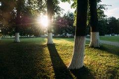 Gröna träd och staden för gräs parkerar offentligt och solljus av solnedgångsolen arkivbilder