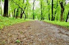 Gröna träd på båda sidor av vägen royaltyfri fotografi