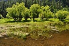 Gröna träd på kusten av spegel sjön Royaltyfria Foton