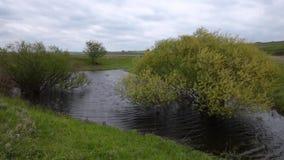 Gröna träd på våren, när vädret är molnigt på sjön arkivfilmer