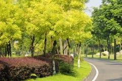 Gröna träd under solsken Fotografering för Bildbyråer