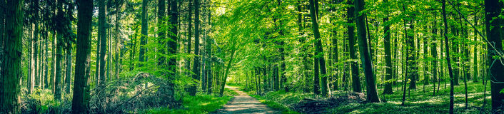 Gröna träd vid en skogbana arkivbilder
